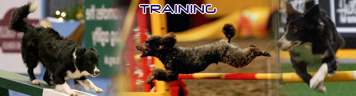 Nedlo Dog Agility Training